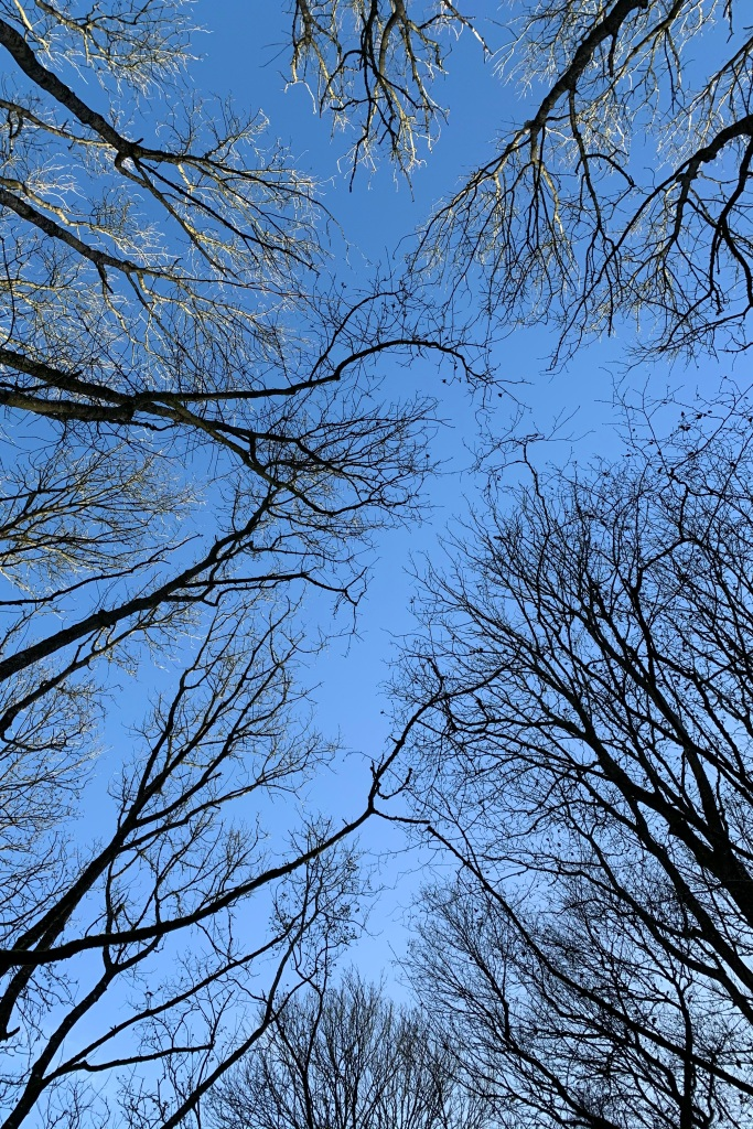 """Bare tree branches against a baby blue sky. The branches appear black except for the very tips, which have been turned silver white by the sunlight. The spaces in the centre, where the branches don't quite meet, clearly show """"crown shyness""""."""