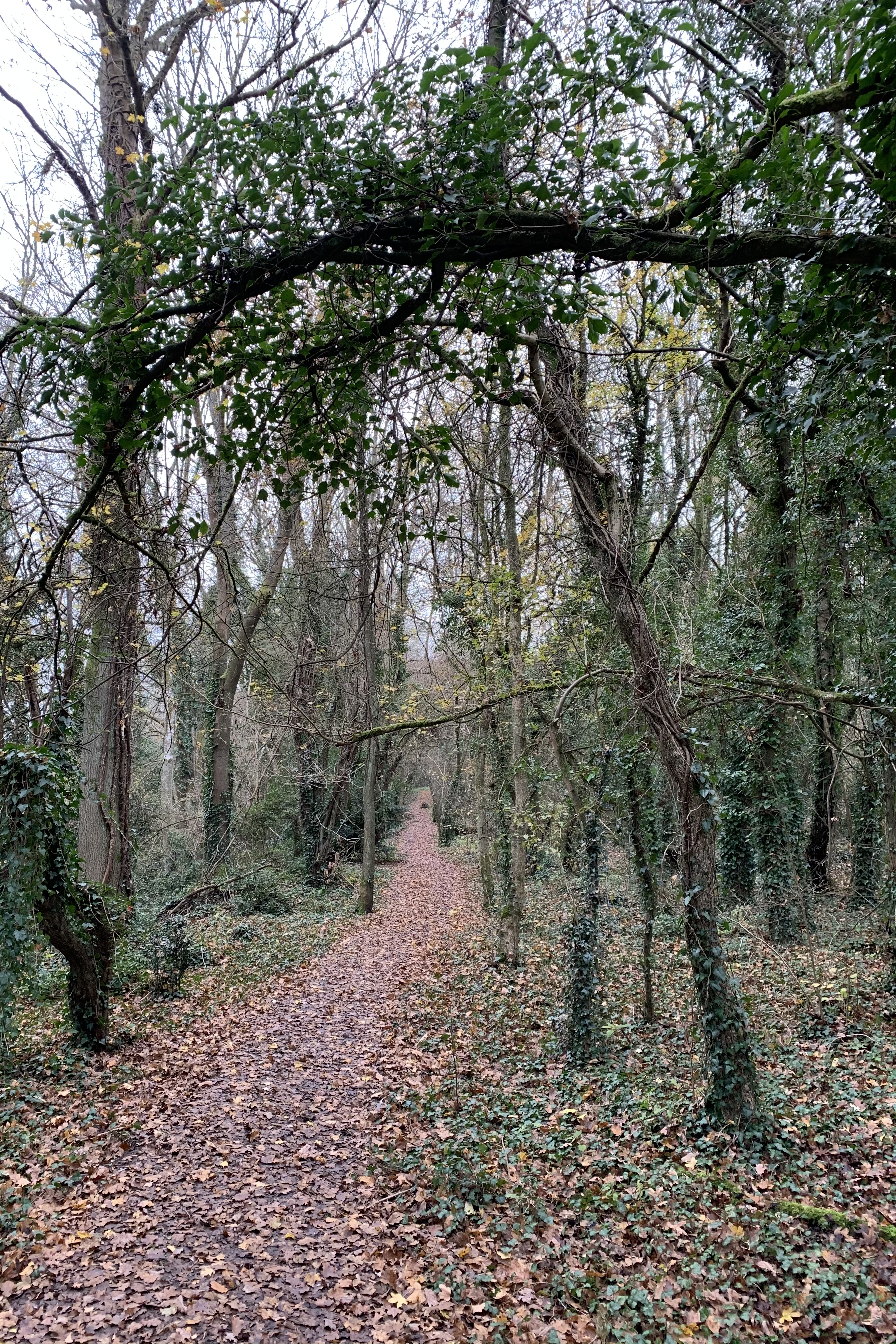 A leaf covered path leads towards the horizon, with trees marking both edges. It can clearly be seen that many of the trees are making archways that frame the path, like open doorways leading you on.