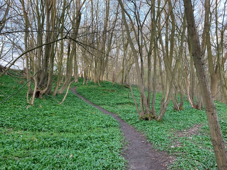 A worn earth path leads upwards and through some trees, every inch of ground either side of the path is covered in the vivid green leaves of wild garlic plants.