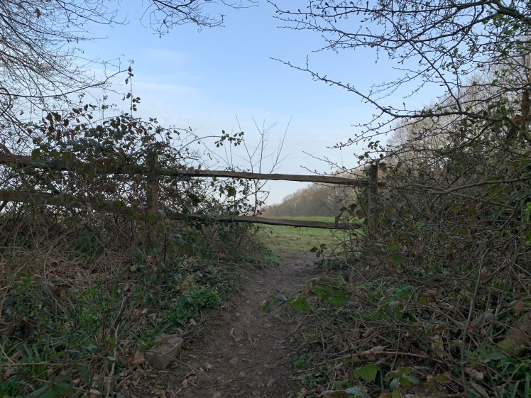 A worn earth path leads under a two bar wooden fence. To either side are brambles and trees starting to bud. Beyond is green grass and more trees and pale blue sky.
