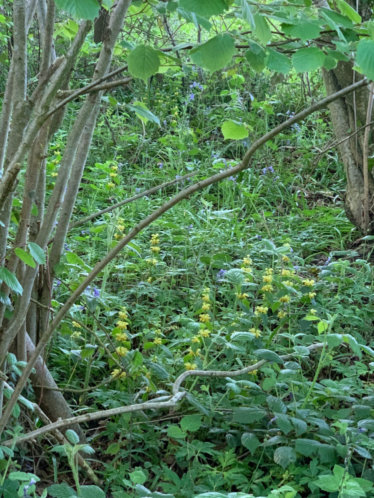 Yellow Archangel patch