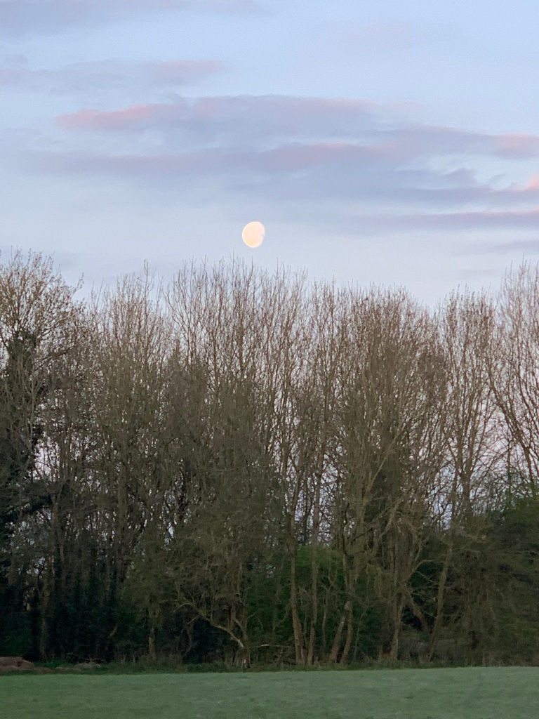 Moon over the trees just after dawn