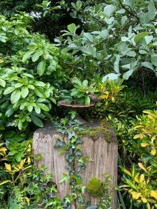 A tiny metal bird bath, with a metal bird, stands on top of an upended railway sleeper. It is surrounded by shrubs and there is ivy climbing very artistically up the sleeper.