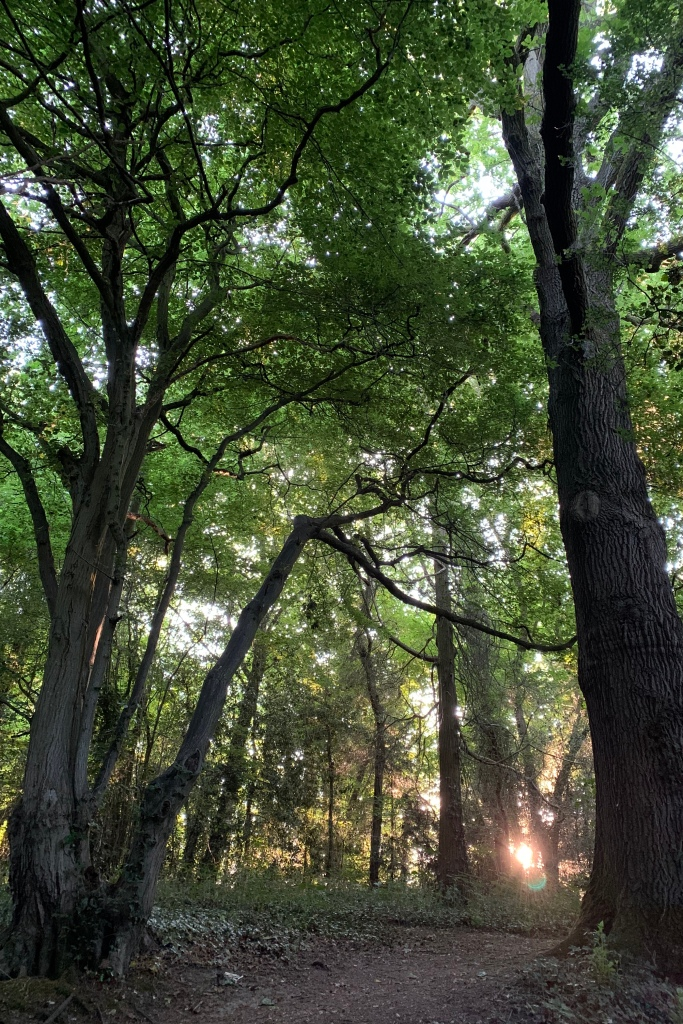 The sun is just visible above the ground, between the tree trunks. The light in the wood is greenish yellow.