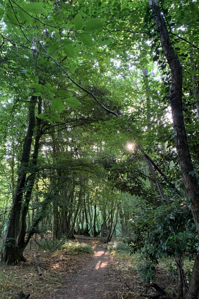 A path between tall trees, brightly lit by the sun now half way up the trees. The light in the woods remains yellow green.