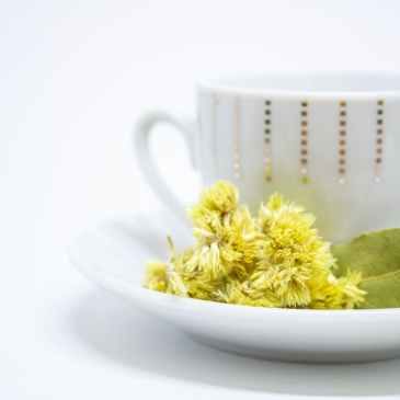 White china tea cup with gold dot pattern sits on a white saucer. There is sprig of some type of yellow flowering shrub sitting on the saucer in front of the cup. The background of the picture is white.