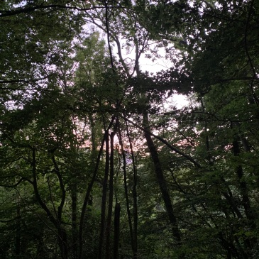 A pale purple blue sky is visible through the tree canopy. The wood itself is bathed in grey green light.