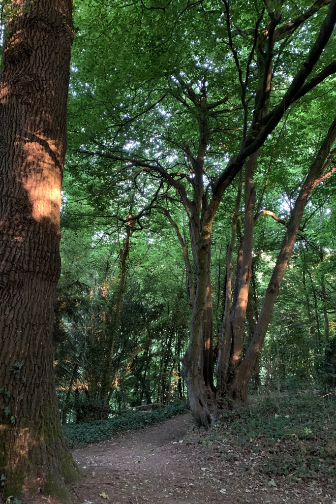 The sun is fully risen and glinting through the trees making patches of vivid light on the tree trunks.
